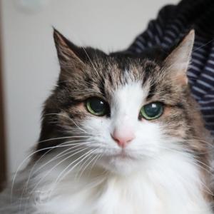 サラちゃん 16歳