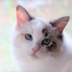 子猫トリオ