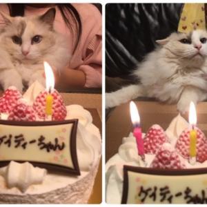 2歳のお誕生日 & ジノちゃん 募集中です