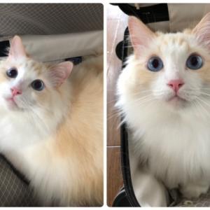 コトリっ子たちのお誕生日 & 母娘写真
