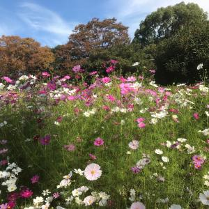 秋の植物園散策