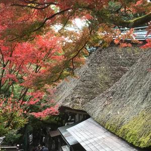 大興善寺の紅葉観賞