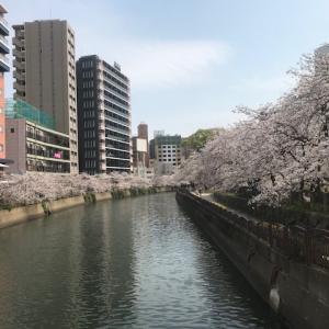 福岡の桜景色