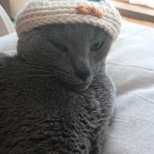 ニャンズ!不思議な帽子を被せられる。