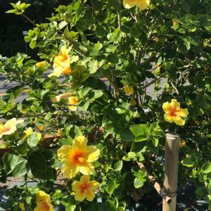 10月に咲く黄色いお花
