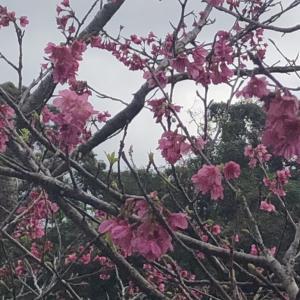 もう春が来てる