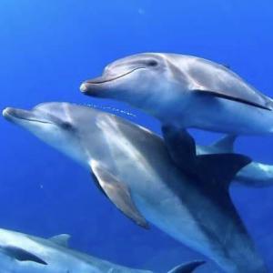 イルカに乗りたい