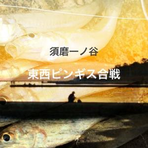 須磨一ノ谷 東西ピンギス合戦 7月18日開催!