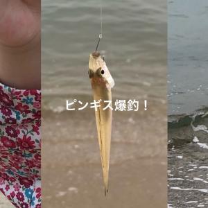 9.12ピンギス爆釣の須磨海岸 3つの砂浜をリサーチしてきたよ。