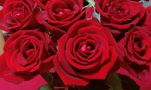 Dozen Red Roses (真紅の薔薇) ~ Birthday Surprise (5)