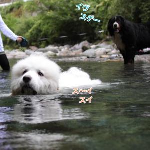 川に行ったよ