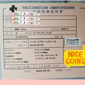 幸村のワクチン接種
