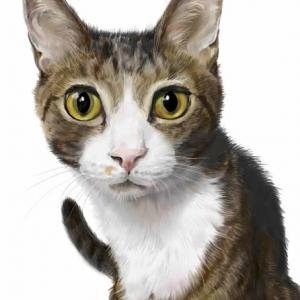 里親会の保護猫たち