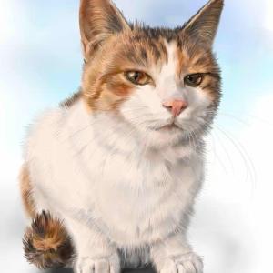 河原の野良猫 三毛猫姉妹
