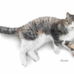 河原の子猫ホタ 1歳になりました