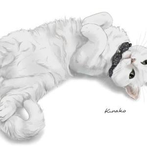 白猫のソイルちゃん
