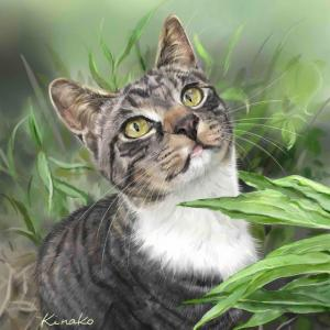 河原の野良猫 草むらの中のペリー