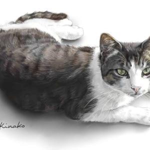 河原の美猫のビワ