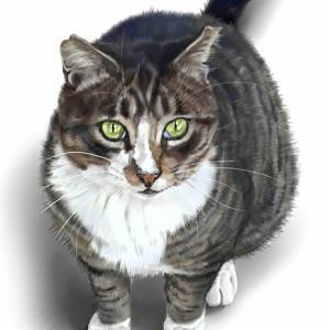 河原の野良猫 タイラ ちょっと乱暴者?