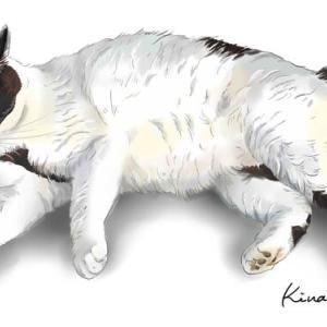 野良猫スージーは個性的