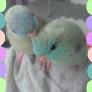フロルちゃん&パールちゃん パート4