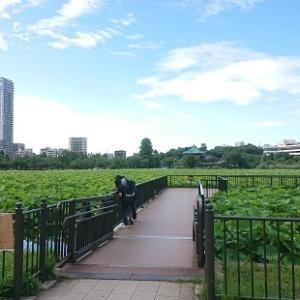 不忍池と上野公園野外音楽堂