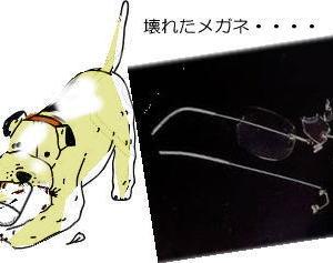 修理不可と言われたメガネの修理初挑戦・・・北海道での25回目のテリ吉プラッキング・・・