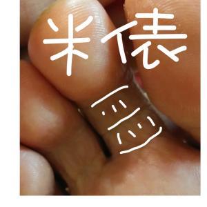 (*^ー゚)ノ 縁起の良い俵踏みの 御指
