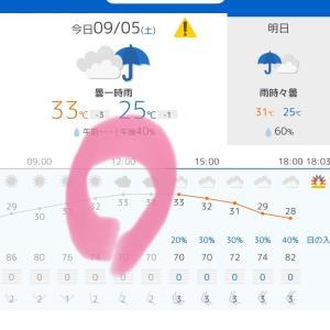 【レース】アップラン彩湖10k 仮設トイレなし地獄