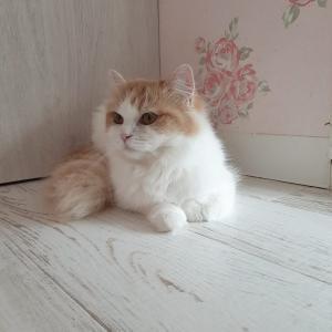GalaxyA7の写真試し撮りと猫カフェといつか猫を飼う日