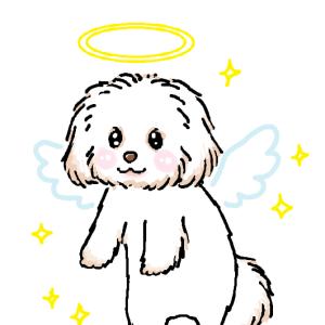 天使になった らんちゃま