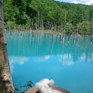 青い池を見に…