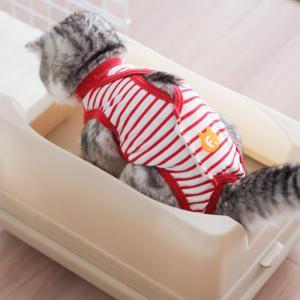 猫がウンチを踏む!おまる式猫トイレ「キャットワレ」で解決しました。