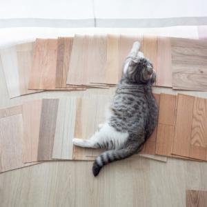 【猫のためのDIY】滑りにくい床材探し。「ピタフィー」を貼ってみた結果