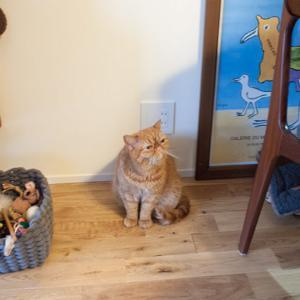 ブログ友の会5弾。猫との生活に憧れる