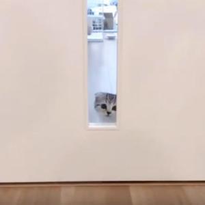 猫と快適に暮らす間取りとは?トイレとキッチンと玄関で困ったこと。