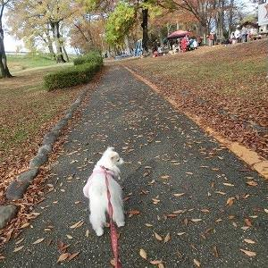 釜無川公園・・・