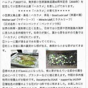 ハカラメ成長日記-1