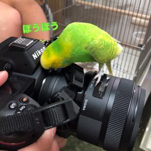つるカメラ男子になる?