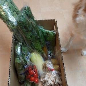 茨城鉾田の野菜
