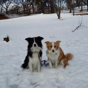 T公園積雪散歩