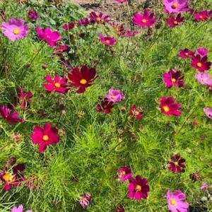 花いっぱいの楽しい散歩