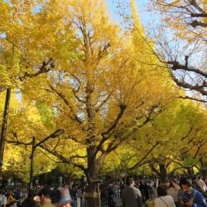 晩秋の神宮外苑