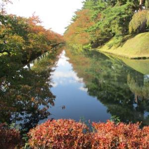 弘前城菊と紅葉まつりは11月1日~7日まで♪赤く色づいた桜の葉