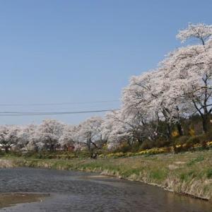 福島南部の桜2019