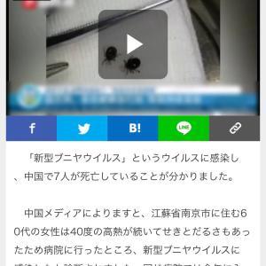 コロナの次は新型プニヤウイルス?!!
