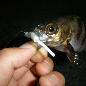 【メバリングの基礎知識】「ただ巻き」がメバルを釣るポイント!