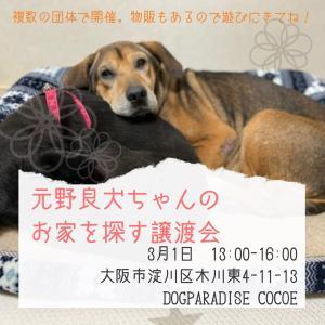3/1の元野良犬〜イベントは中止です。