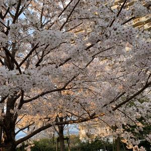春なのにねぇー (~_~;)