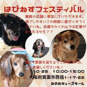 10/25 同時開催愛護団体おるよー!